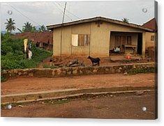 Nigerian House Acrylic Print by Amy Hosp