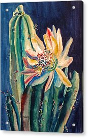 Night Blooming Cactus Acrylic Print by Carolyn Jarvis