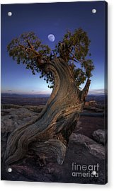 Night Guardian Of The Valley Acrylic Print by Marco Crupi