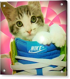 Nike Kitten Acrylic Print by Alexandria Johnson