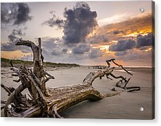 No Respect Acrylic Print by Steve DuPree
