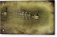 No Time For Stragglers Acrylic Print by Diane Schuster