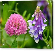 Non Identical Twins Acrylic Print by Marty Koch
