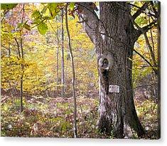 North Woods Guardian Acrylic Print by Mary Lee Dereske