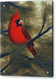 Northern Cardinal Acrylic Print by Rick Bainbridge