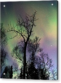Northern Lights Cottonwood Acrylic Print by Ron Day