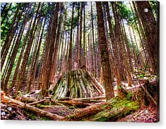 Northwest Old Growth Acrylic Print by Spencer McDonald