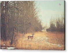 November Deer Acrylic Print by Carrie Ann Grippo-Pike