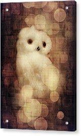 O Owly Night Acrylic Print by Loriental Photography