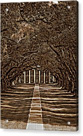 Oak Alley Bw Acrylic Print by Steve Harrington