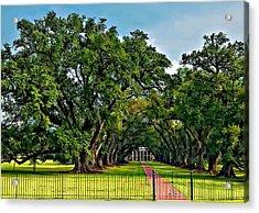 Oak Alley Plantation 2 Acrylic Print by Steve Harrington