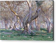 Oak Grove Acrylic Print by Gunnar Widforss