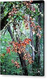 Oak Stories Acrylic Print by Gwyn Newcombe