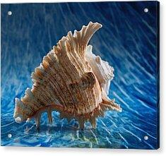 Ocean Breeze 2 Acrylic Print by Tom Druin