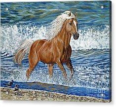 Ocean Stallion Acrylic Print by Danielle  Perry