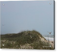 Ocracoke Dunes And Gulls Acrylic Print by Cathy Lindsey