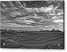 October Patterns Bw Acrylic Print by Steve Harrington