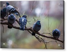 Of The Personal Opinion - Featured 3 Acrylic Print by Alexander Senin