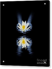 Offering Of The Lotus Acrylic Print by Tim Gainey