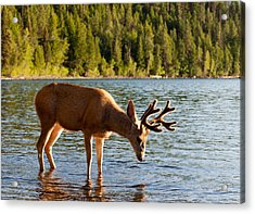 Oh Deer Is That Me Acrylic Print by Bruce Gourley