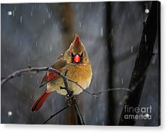 Oh No Not Again Acrylic Print by Lois Bryan