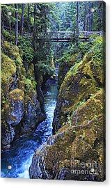 Ohanapecosh River Acrylic Print by Mark Kiver