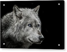 Old Blue Eyes Acrylic Print by Paul Neville