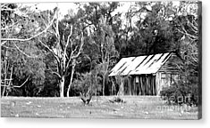 Old Bush Shed Acrylic Print by Phill Petrovic