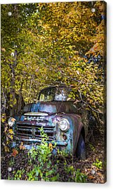 Old Dodge Acrylic Print by Debra and Dave Vanderlaan