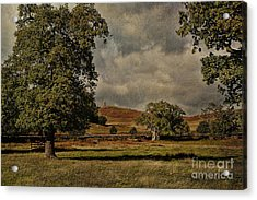 Old John Bradgate Park Leicestershire Acrylic Print by John Edwards