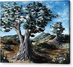 Old Olive Tree Acrylic Print by Anastasiya Malakhova