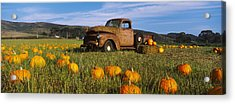 Old Rusty Truck In Pumpkin Patch, Half Acrylic Print by Panoramic Images