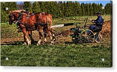 Old Time Horse Plowing Acrylic Print by Dan Sproul