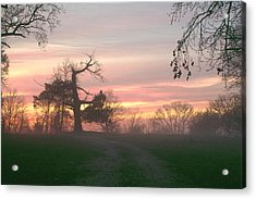 Old Tree At Sunset Acrylic Print by Brian Harig
