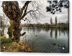Old Tree Acrylic Print by Oleksandr Maistrenko