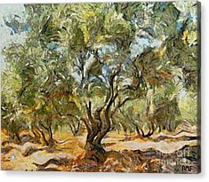 Olive Grove Acrylic Print by Dragica  Micki Fortuna