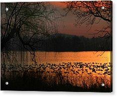 On Golden Pond Acrylic Print by Lori Deiter