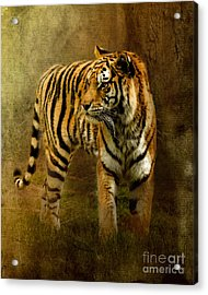 On The Hunt Acrylic Print by Betty LaRue
