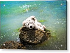 On The Rocks - Teddy Bear Art By William Patrick And Sharon Cummings Acrylic Print by Sharon Cummings
