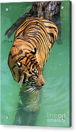 On The Water Acrylic Print by Dan Holm
