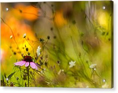 Once Upon A Time There Lived A Flower Acrylic Print by Mary Amerman