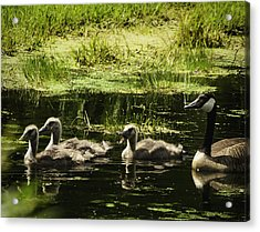 One Honk Says It All Acrylic Print by Thomas Young