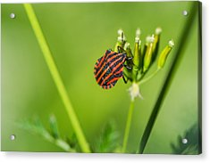 One More Bottle Doesn't Hurt - Featured 3 Acrylic Print by Alexander Senin