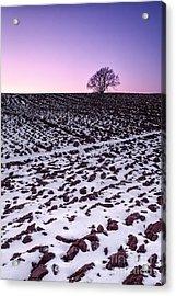 One More Tree Acrylic Print by John Farnan