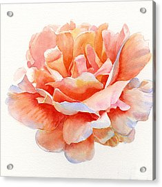 Orange And Gold Rose Square Design Acrylic Print by Sharon Freeman