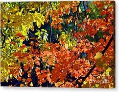 Orange And Yellow Acrylic Print by Kathleen Struckle
