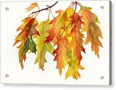 Orange And Yellow Oak Leaves Acrylic Print by Sharon Freeman