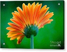 Orange Blast Acrylic Print by Lois Bryan