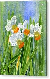Orange Daffodils With Background Acrylic Print by Sharon Freeman