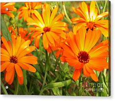 Orange Flowers Acrylic Print by Thomas R Fletcher